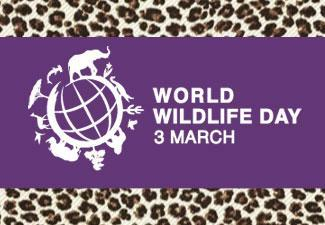 Download Our Animal Print Papers Perfect for World Wildlife Day